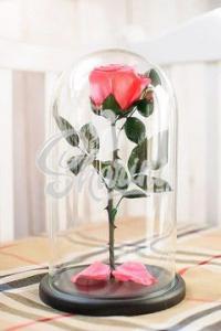 "Роза в колбе "" Premium Light Pink"""